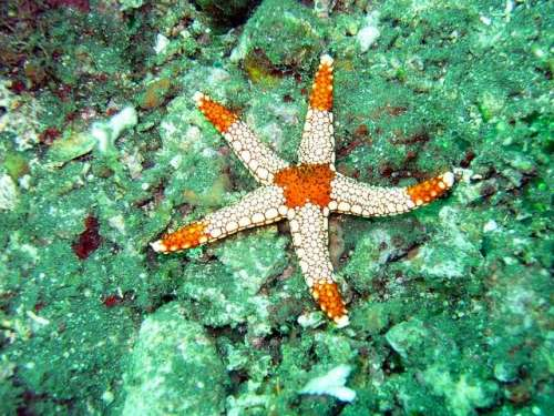 meaning-of-a-starfish